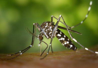 Aproape 200 de cazuri de îmbolnăviri cauzate de infecţia cu virusul West Nile au fost raportate în România