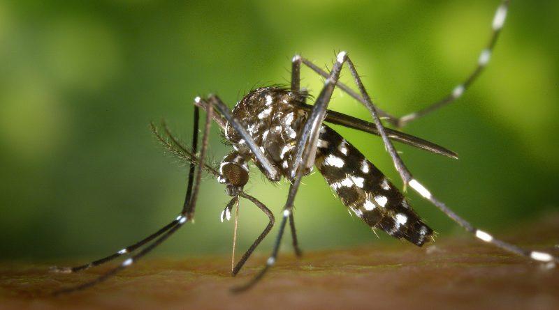 Infecţia cu virusul West Nile a făcut o victimă până în prezent