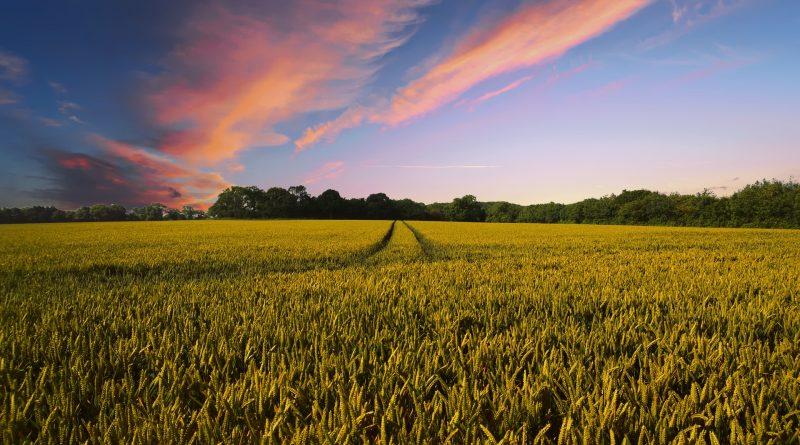 Stabilire preţuri la principalele produse agricole pentru anul 2018