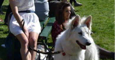 Concurs de frumusețe pentru câini, pisici și alte animale