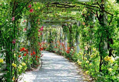 Clujenii vor avea la dispoziție pentru plimbare și relaxare patru noi parcuri