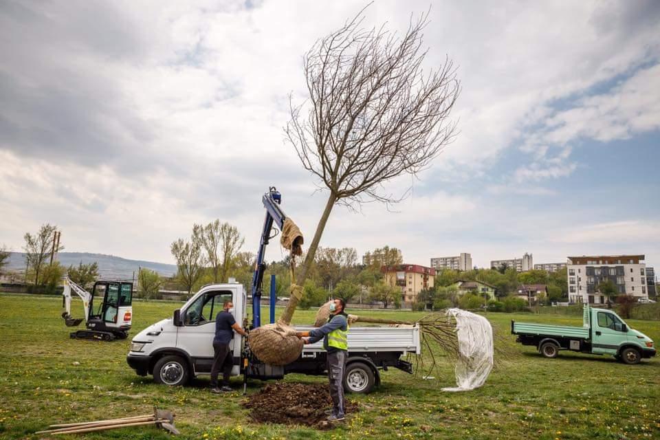 900 de arbori au fost plantați în ultimele luni în oraș