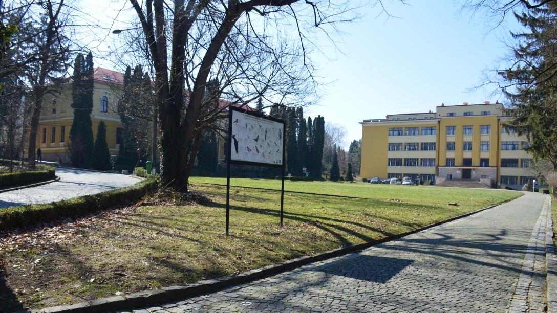 Cursuri și seminarii online, lucrări practice offline, la USAMV Cluj-Napoca
